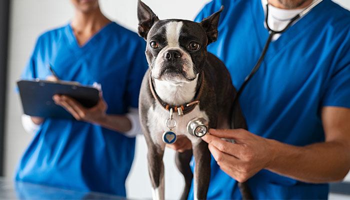 Consulta veterinaria en San Isidro de Níjar, Almería